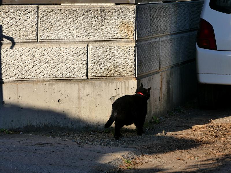 ブロック塀角の黒猫3