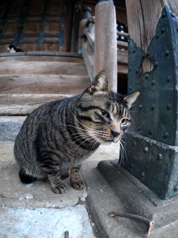 堂前のキジトラ猫2