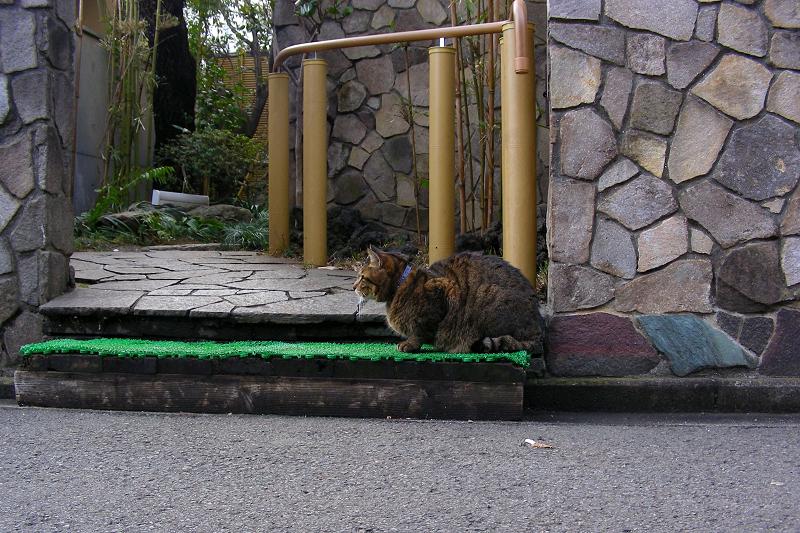 門番のキジトラ猫1