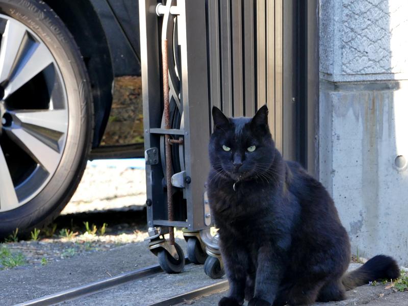怖1顔の黒猫1