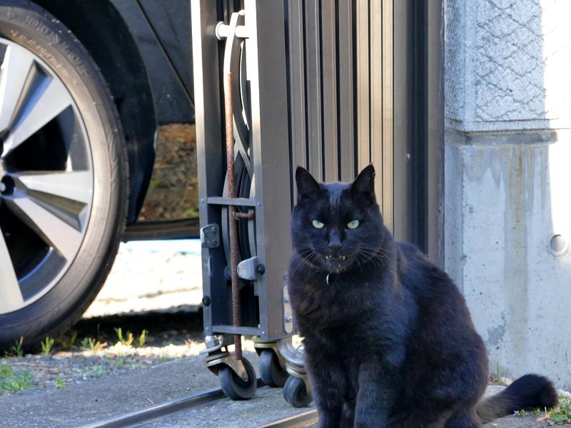 怖い顔の黒猫2