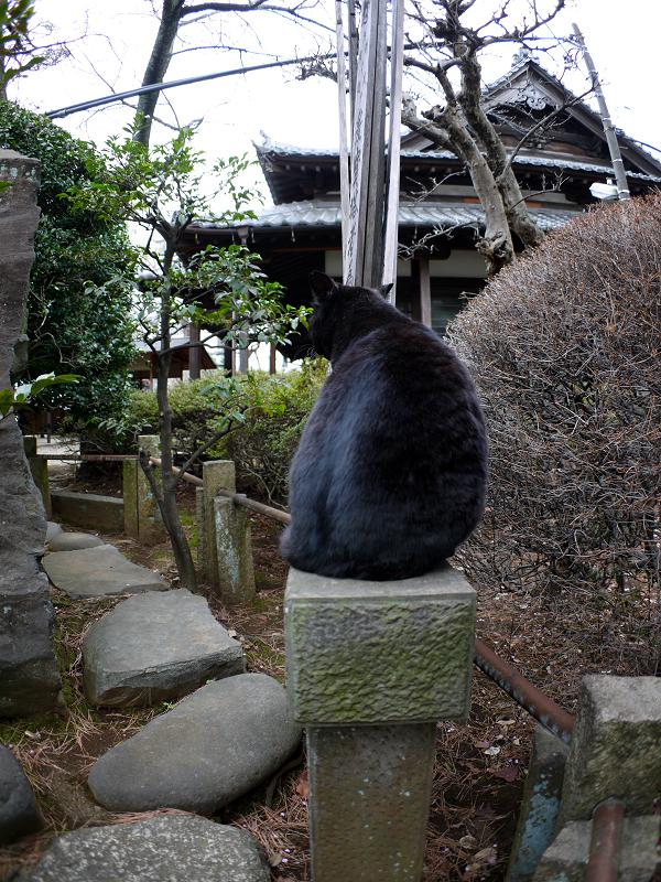 玉垣の黒猫1
