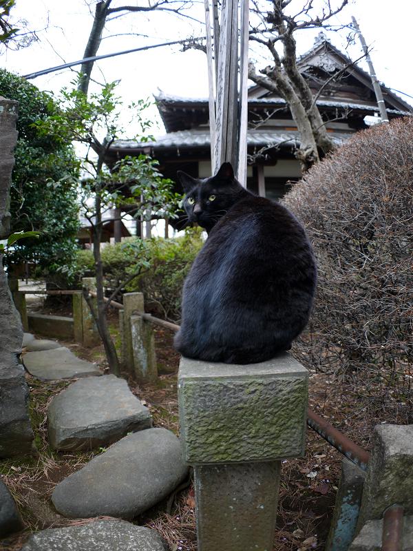 玉垣の黒猫2