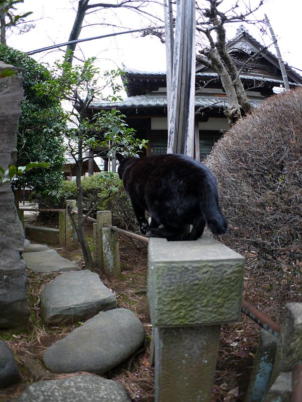 玉垣の黒猫3