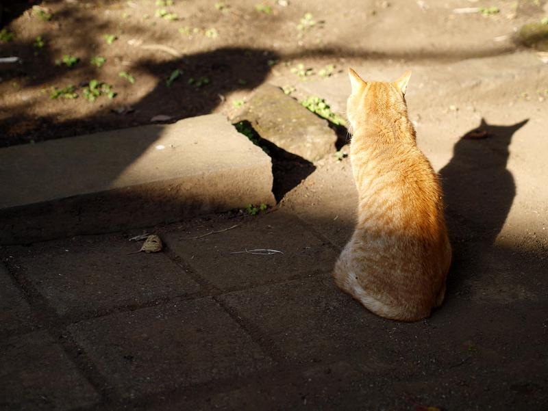 茶トラ猫の影1