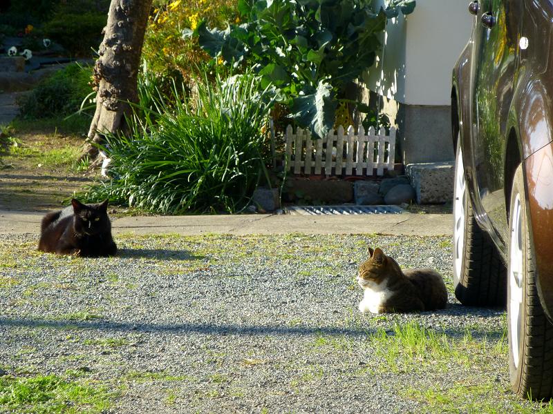 敷地内の猫たち1