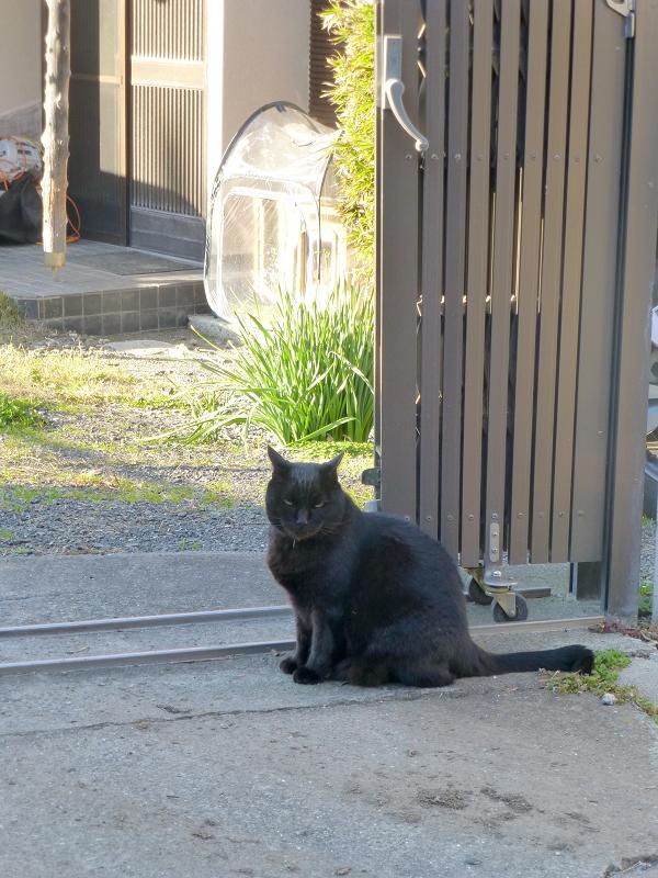 敷地内の猫たち2