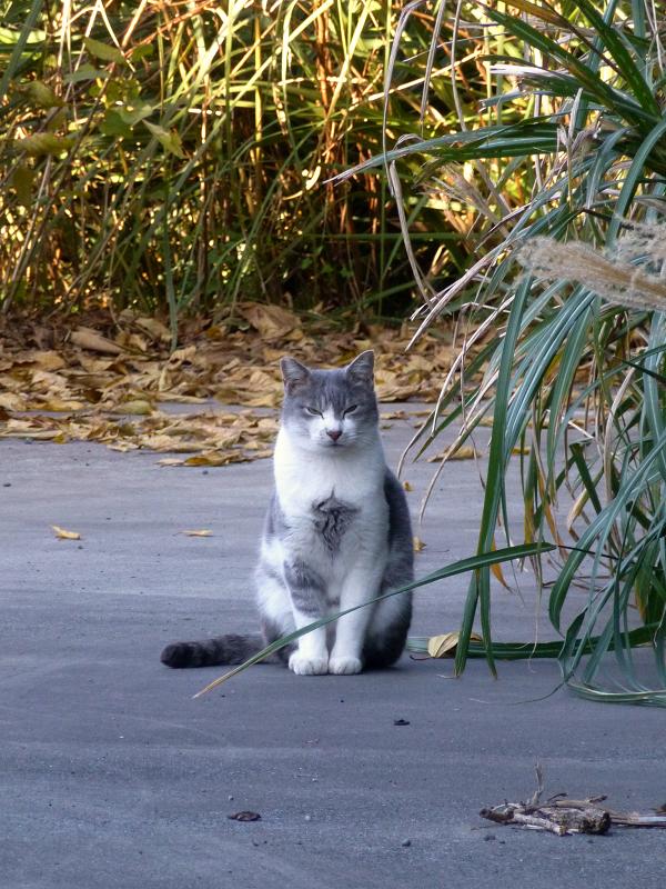 敷地内の猫たち3