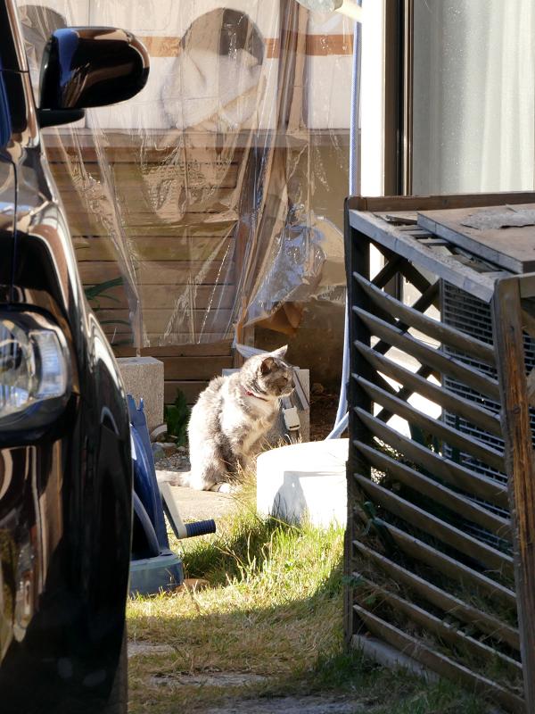 敷地内の猫たち4