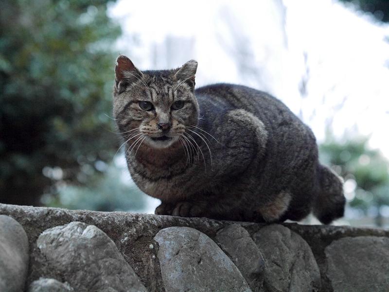 初対面のキジトラ猫