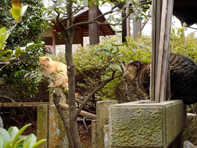 玉垣と猫たち1