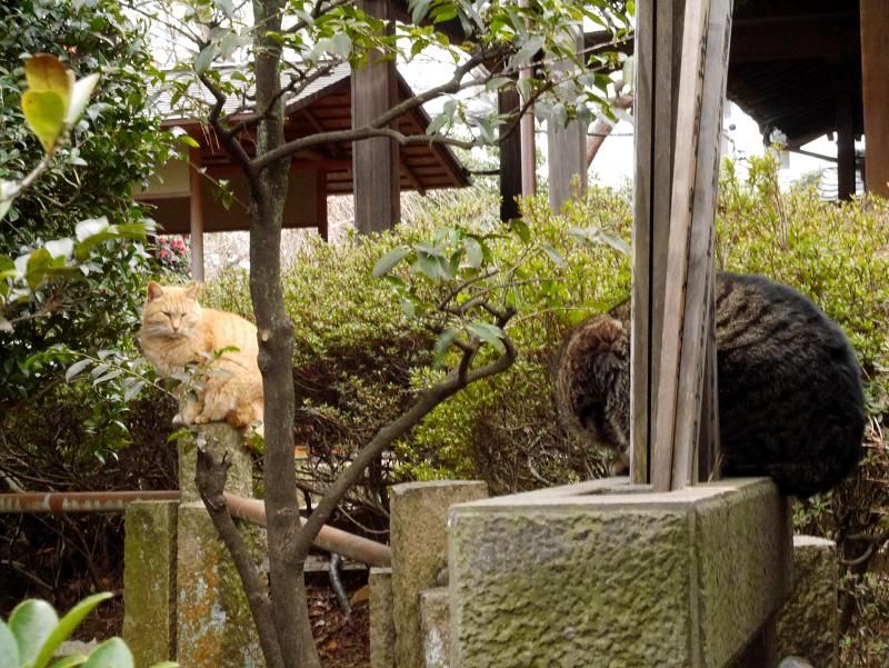 玉垣と猫たち2