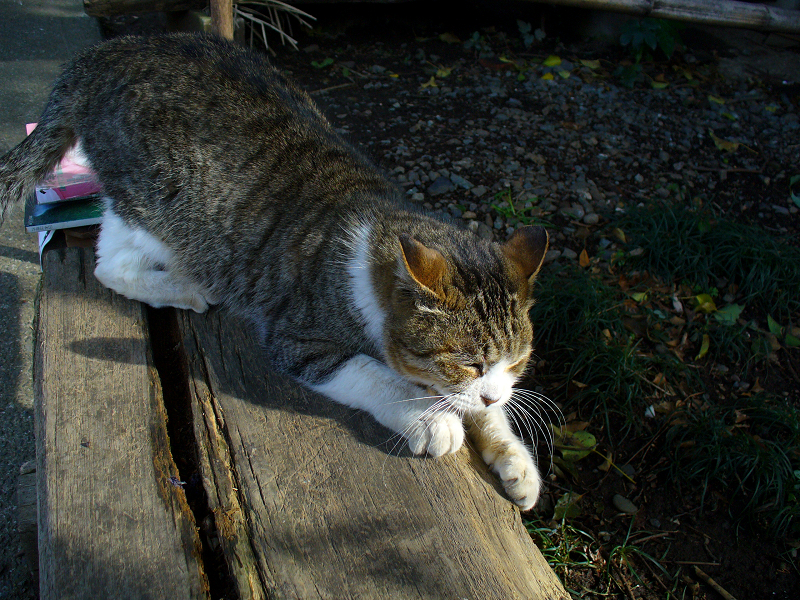 枕木ベンチのキジ白猫2