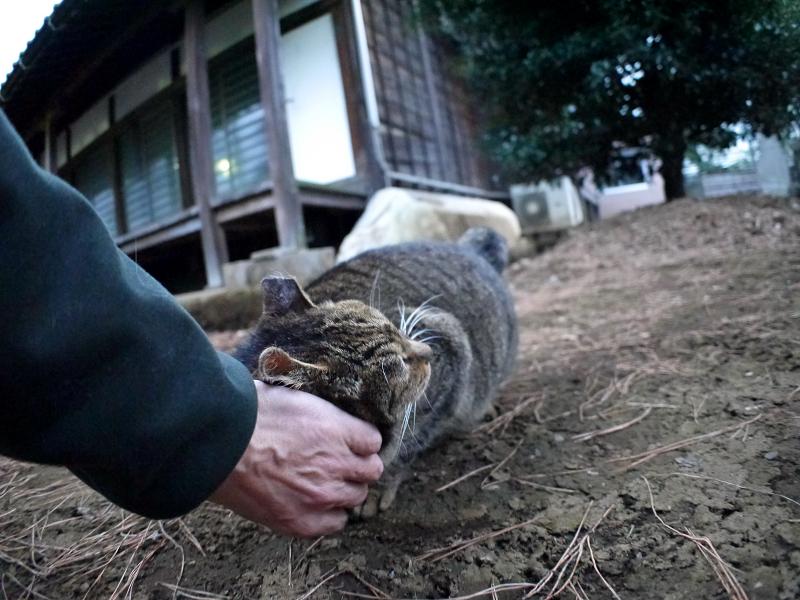 初対面で触れたキジトラ猫2