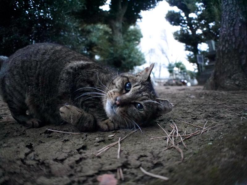 初対面で触れたキジトラ猫3