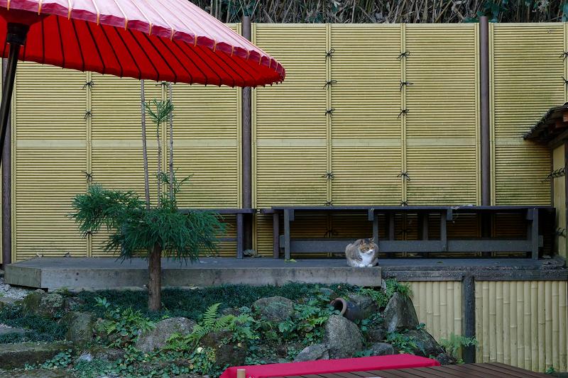 和風とキジ白猫2