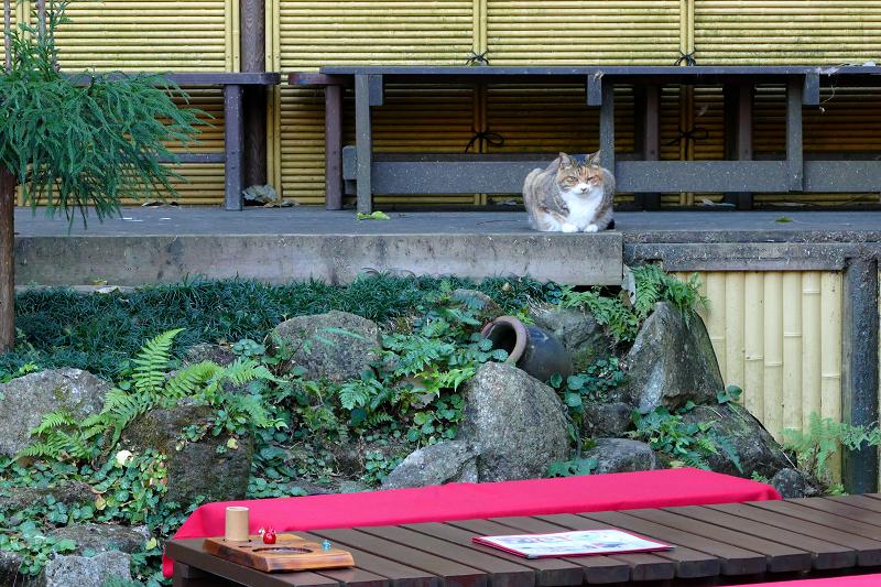 和風とキジ白猫3