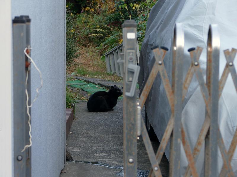 民家敷地内の黒猫1