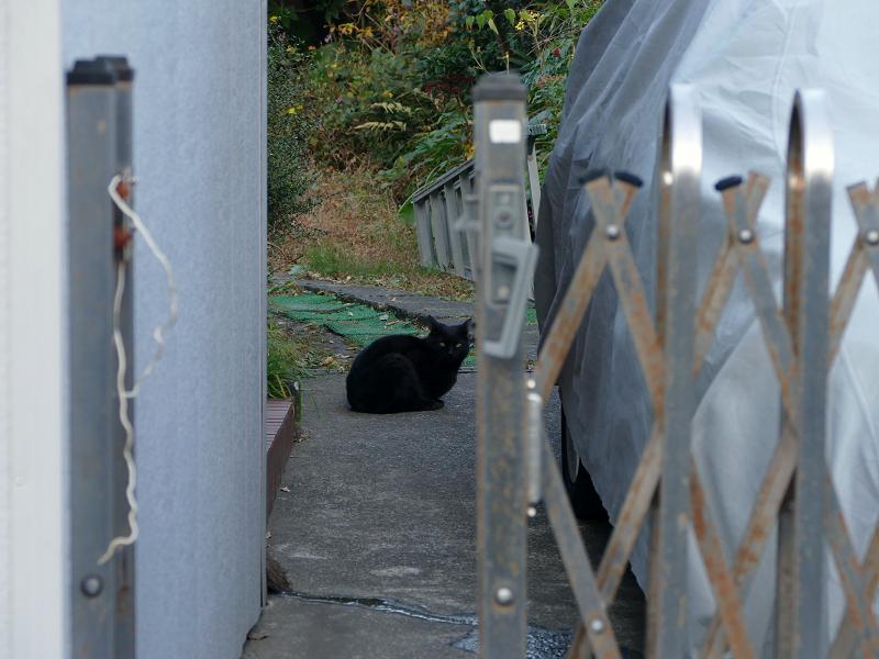 民家敷地内の黒猫2