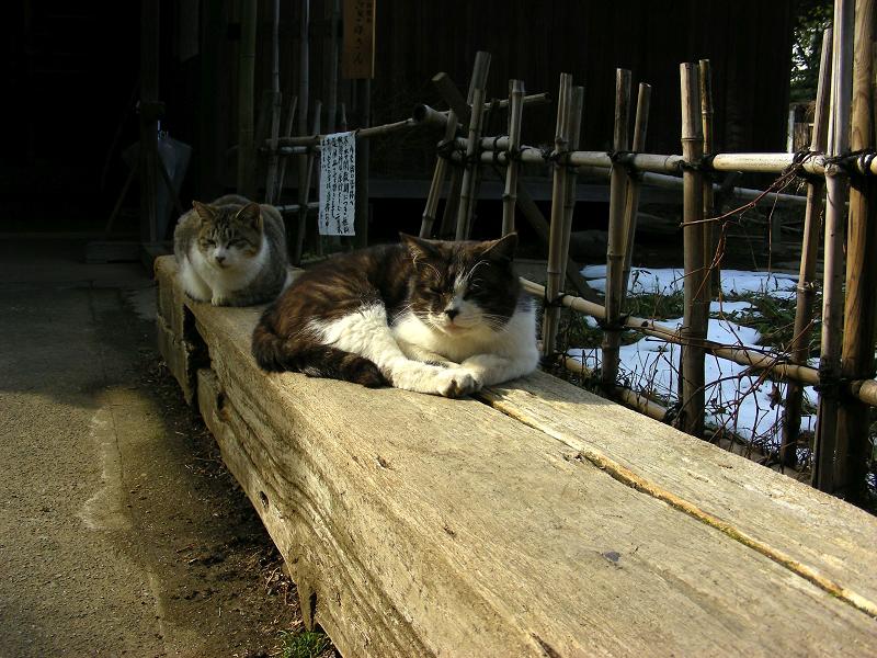 枕木ベンチの猫たち1