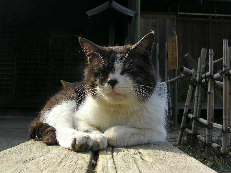 枕木ベンチの猫たち2