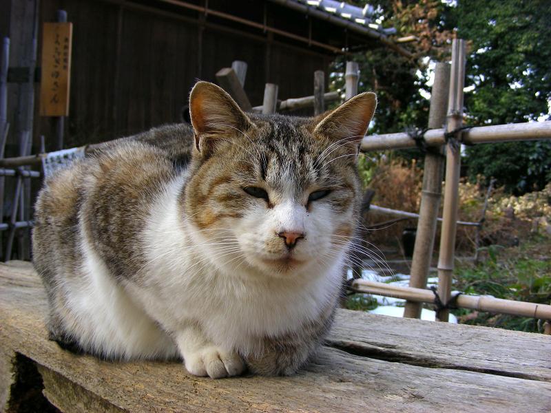 枕木ベンチの猫たち3