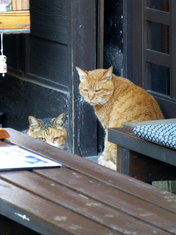 和風と猫2匹3