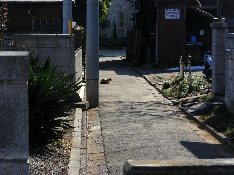 路地で佇む猫1