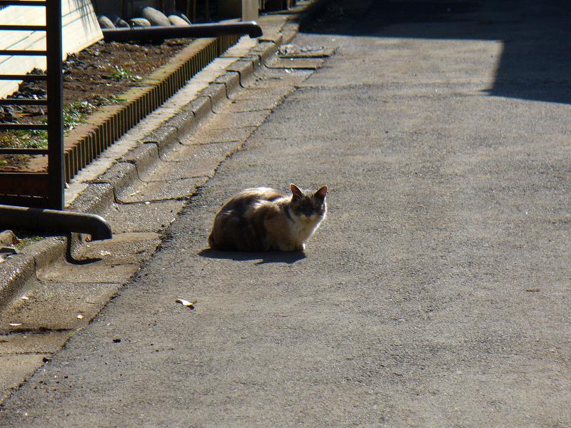 路地で佇む猫2