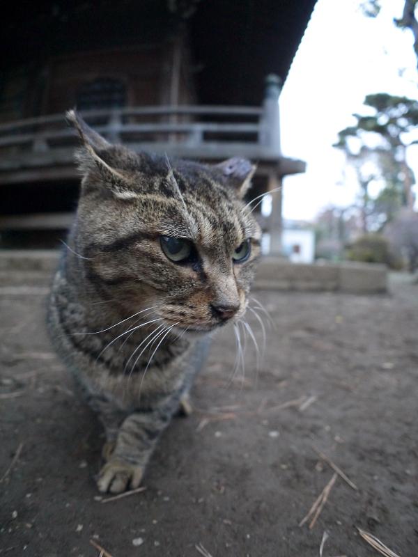 仲良しになったキジトラ猫1