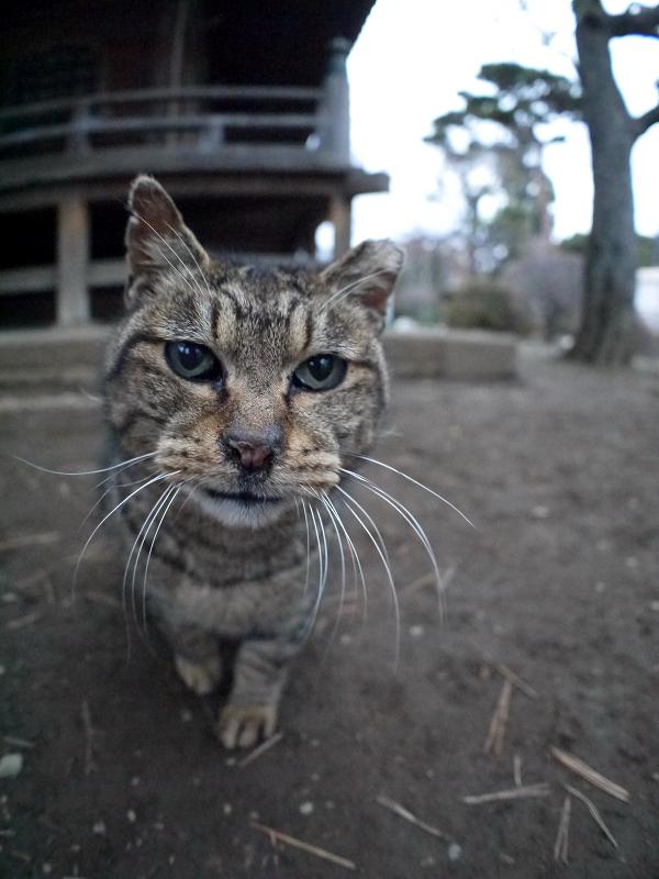 仲良しになったキジトラ猫2