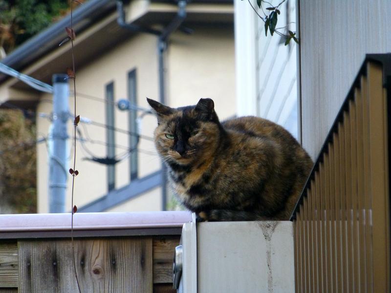 室外機のサビ柄猫