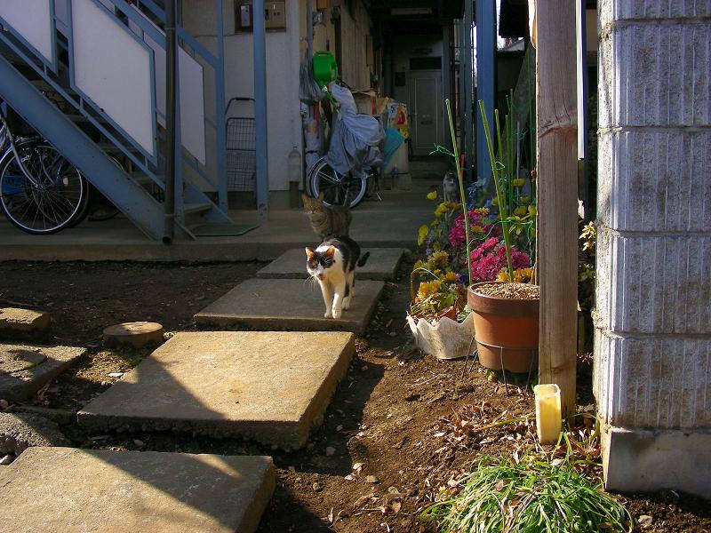 アパートから登場する猫1