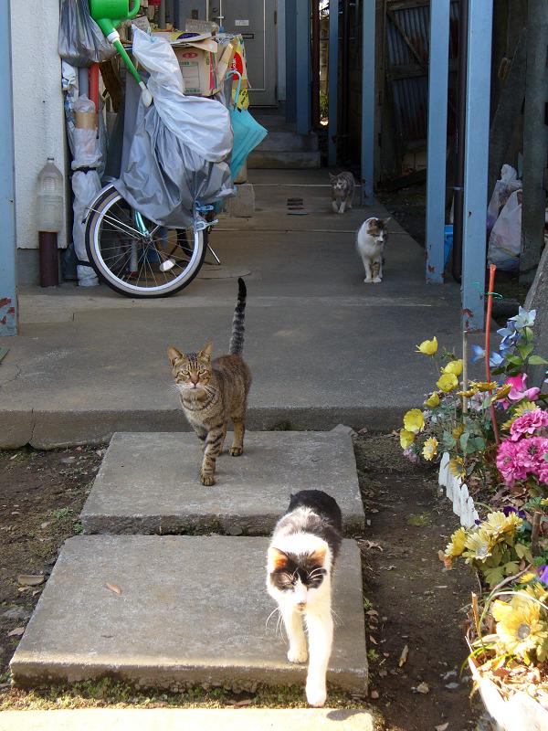 アパートから登場する猫2