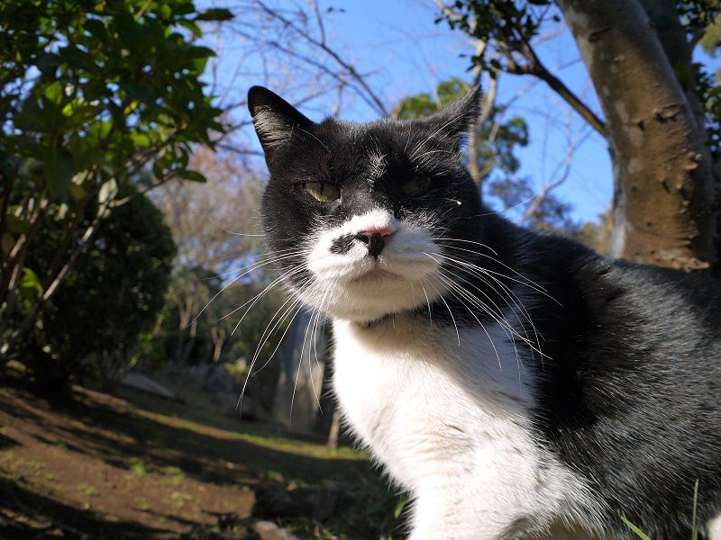黒白猫のローアングル1