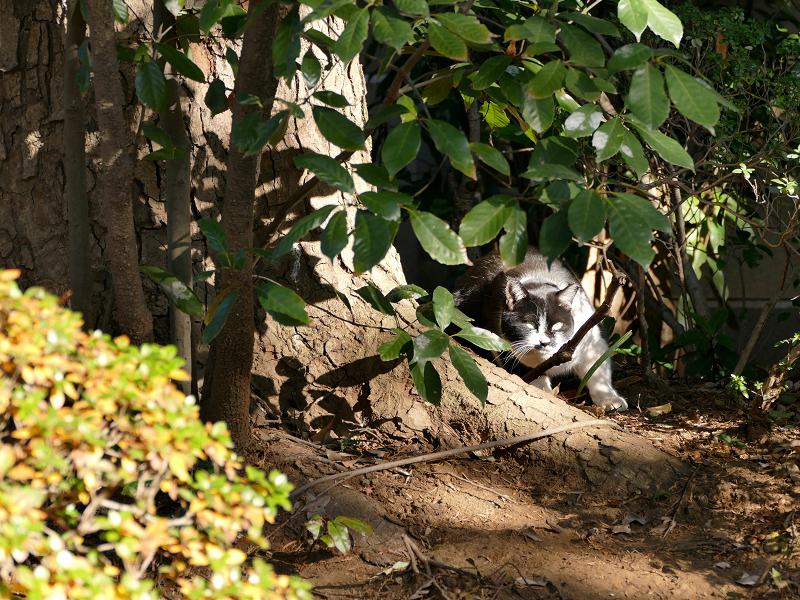 茂みの中の猫2