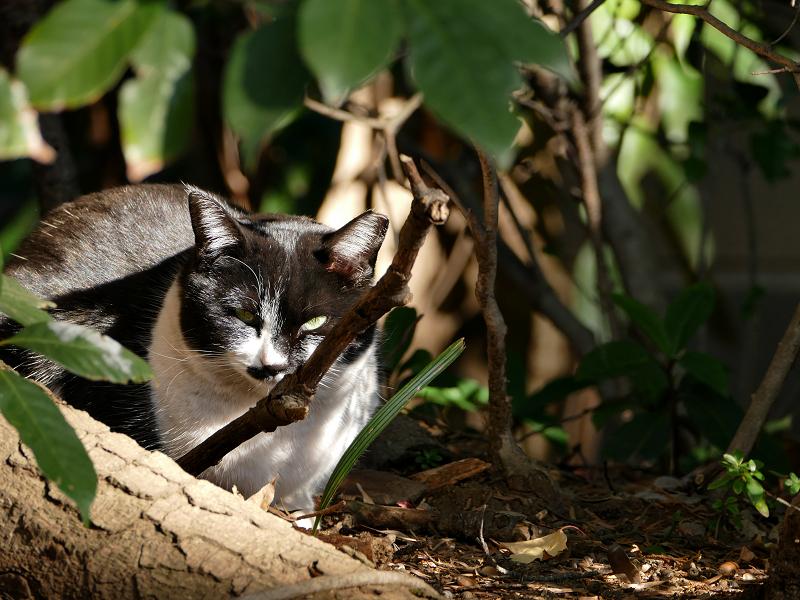 茂みの中の猫3