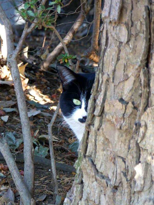 すぐに逃げた黒白猫1