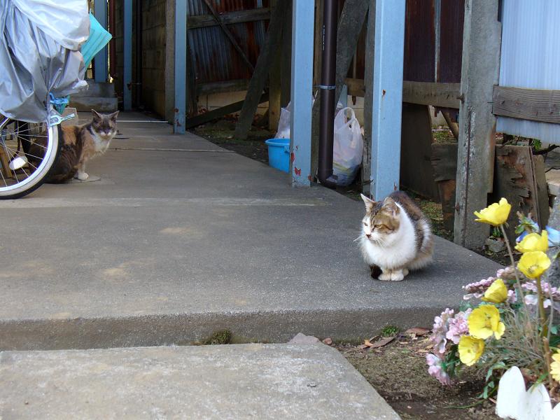 アパート前の猫2