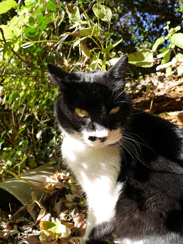 茂みの猫1