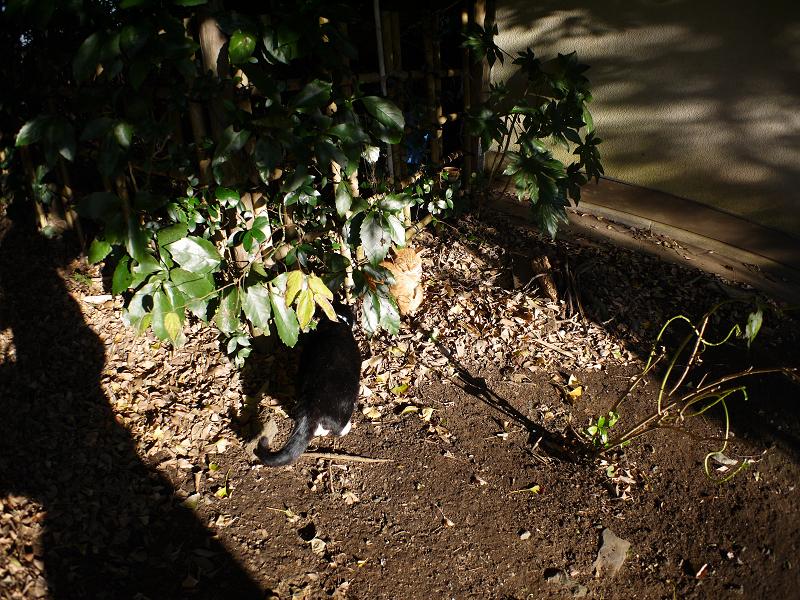 茂みの猫たち