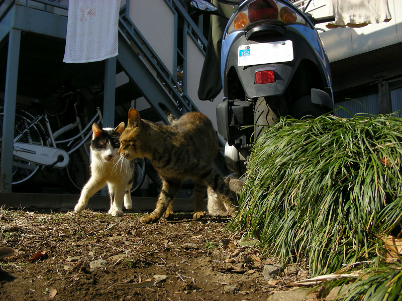 アパートから出てきた猫のローアングル3