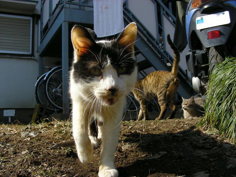 アパートから出てきた猫のローアングル4