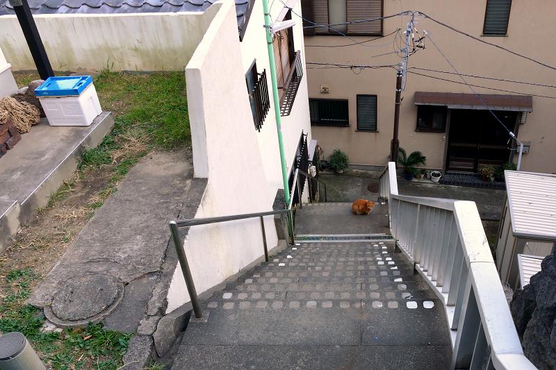 階段で佇む茶トラ猫