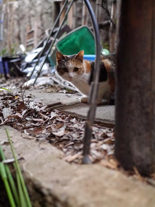 ゴチャゴチャした場所の三毛猫2