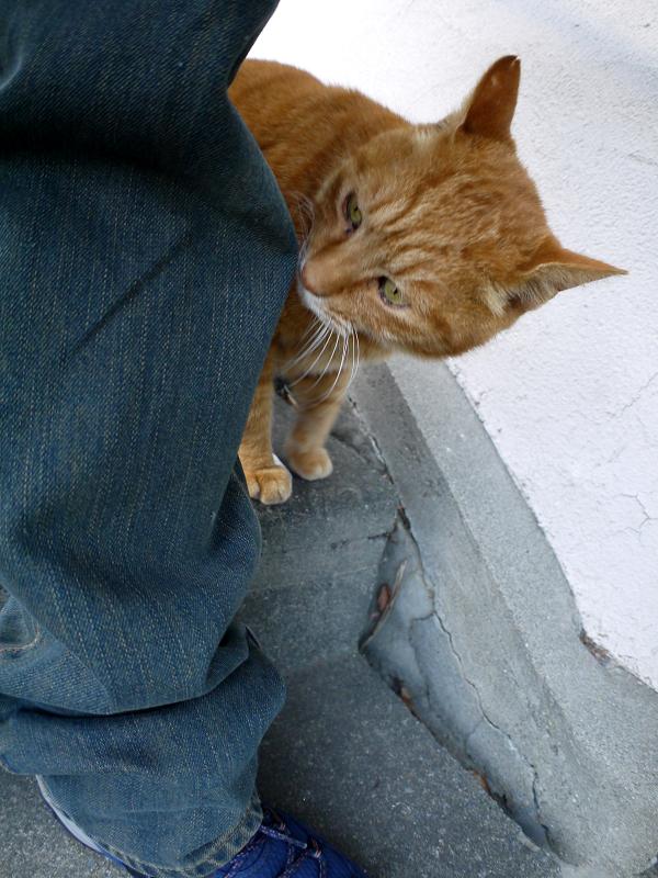 階段の茶トラ猫のニオイチェック2