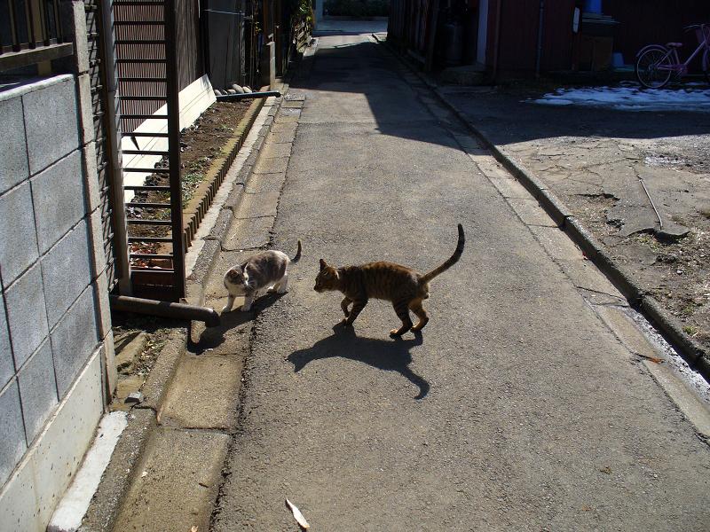 猫路地の猫たち1