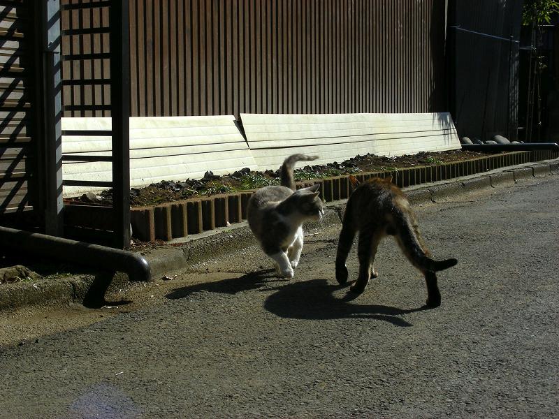 猫路地の猫たち2