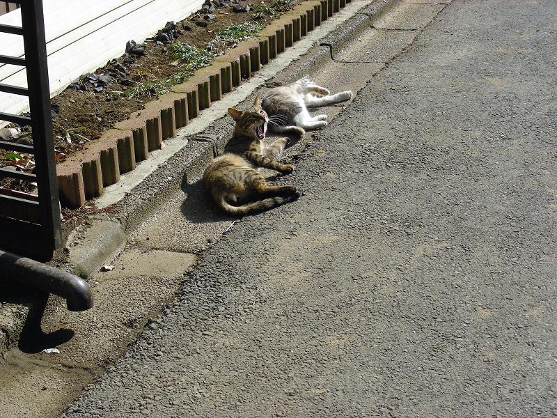 猫路地の猫たち3