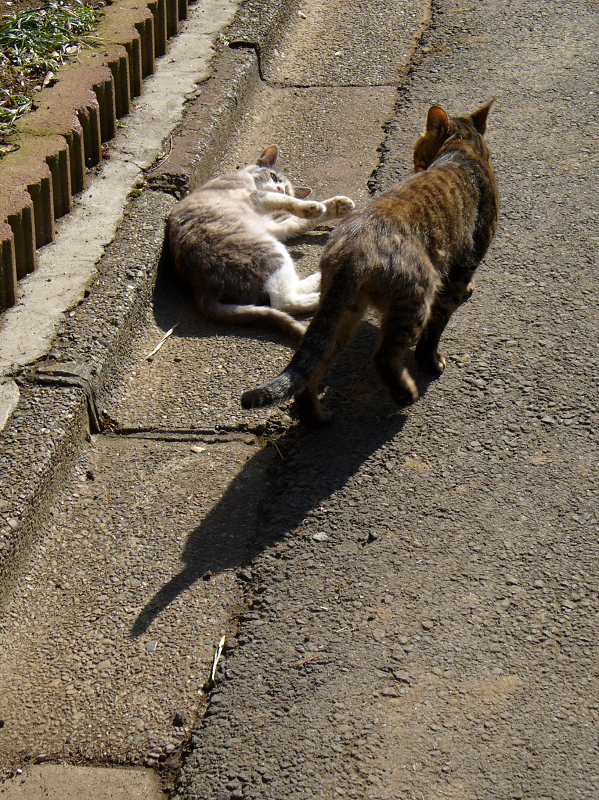 猫路地の猫たち4
